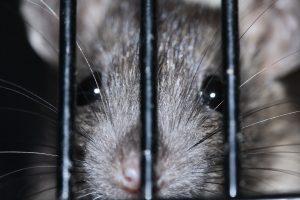 Lanzer temía que torturaran a su padre y a su novia con ratas